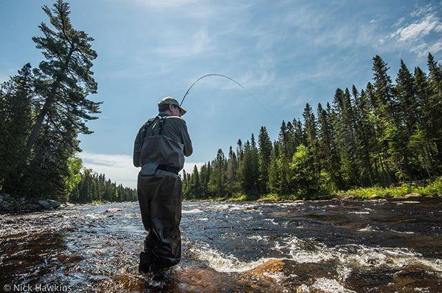 Is there any better feeling? // #atlanticsalmon #salmonfishing #flyfishing #conservation #wildsalmon #wildrivers #findyourwater #keepemwet #flyfishingphotography #catchandrelease #fishneedwater #adventure #salmon #atlanticsalmonfederation #salmosalar  #salmotribe #looptackle #loopaktiv #newbrunswick #miramichiriver #sageflyfish #fishon