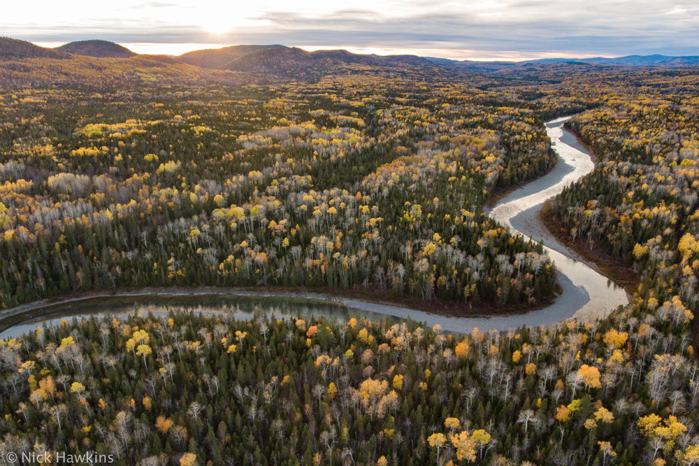 Gaspé-Saving-Salmon-Nick-Hawkins-0302.jpg