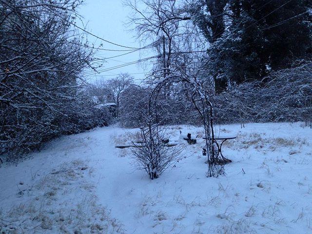 Good morning winter wonderland. #Winter #Virginia #Charlottesville #Snow #SnowDay #Beauty #NoFilter #NoFilterNeeded #FrontYard #WinterWonderland