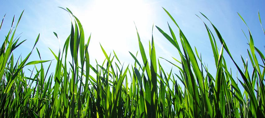 Charlottes Premier lawn & landscaping service provider
