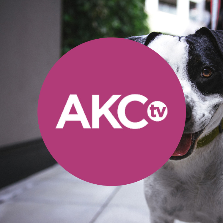 Press_AKCTV.jpg