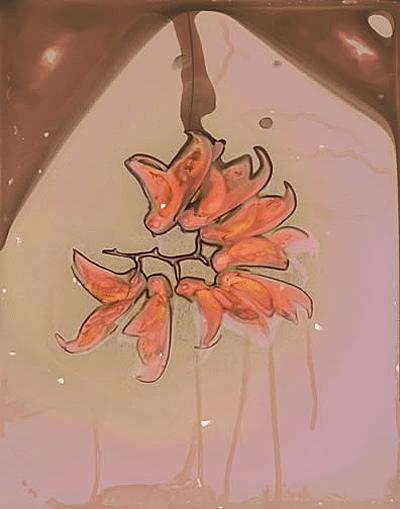 Leguminosae #1
