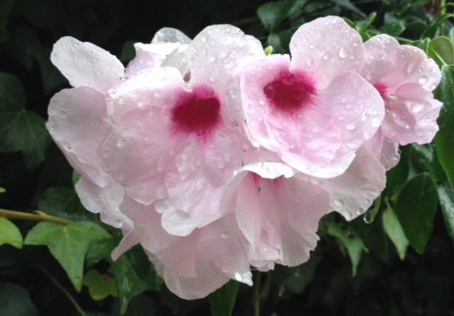 raindrops on petals