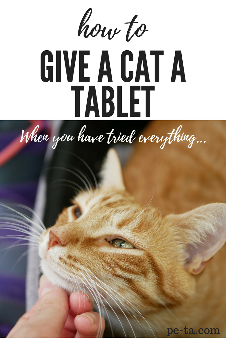 How to give a cat a tablet when you have tried everything. Cat mum advice on pe-ta.com