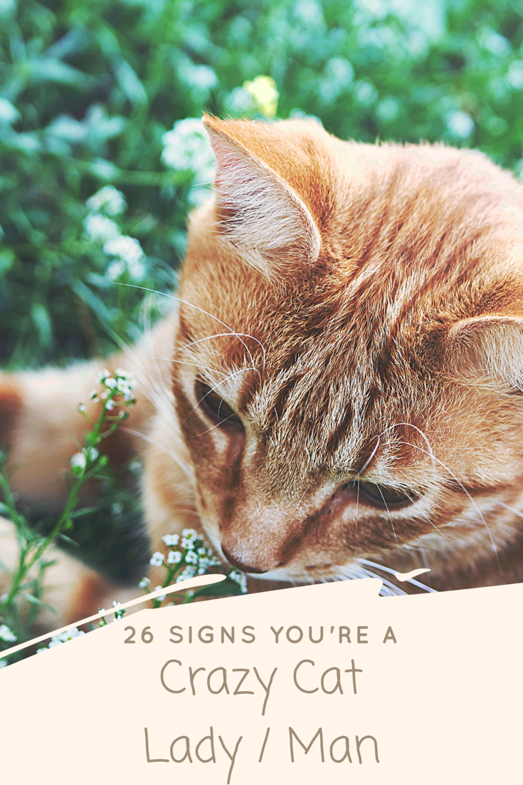 26 Signs You're A Crazy Cat Lady / Man.