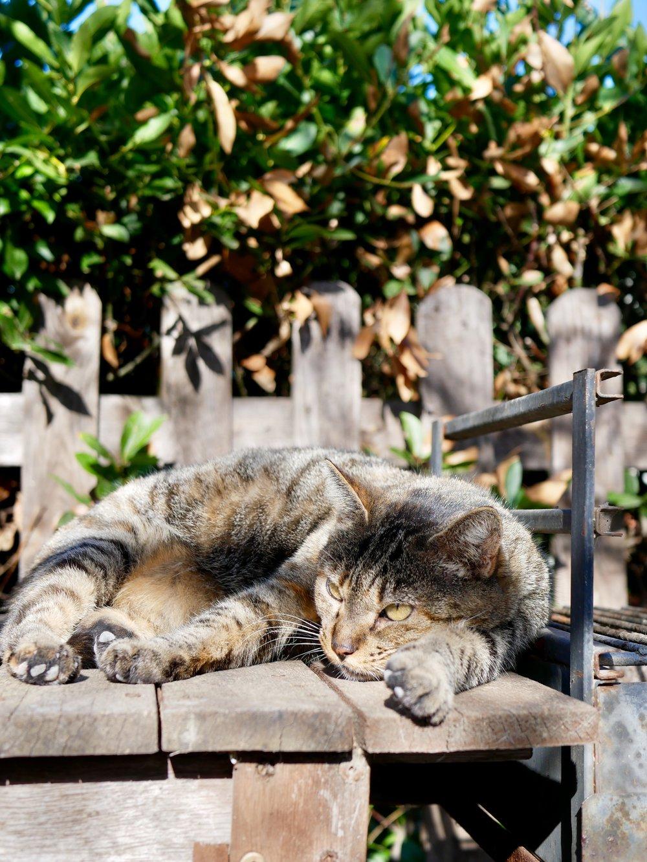 Tina Cat sleeping in the sun