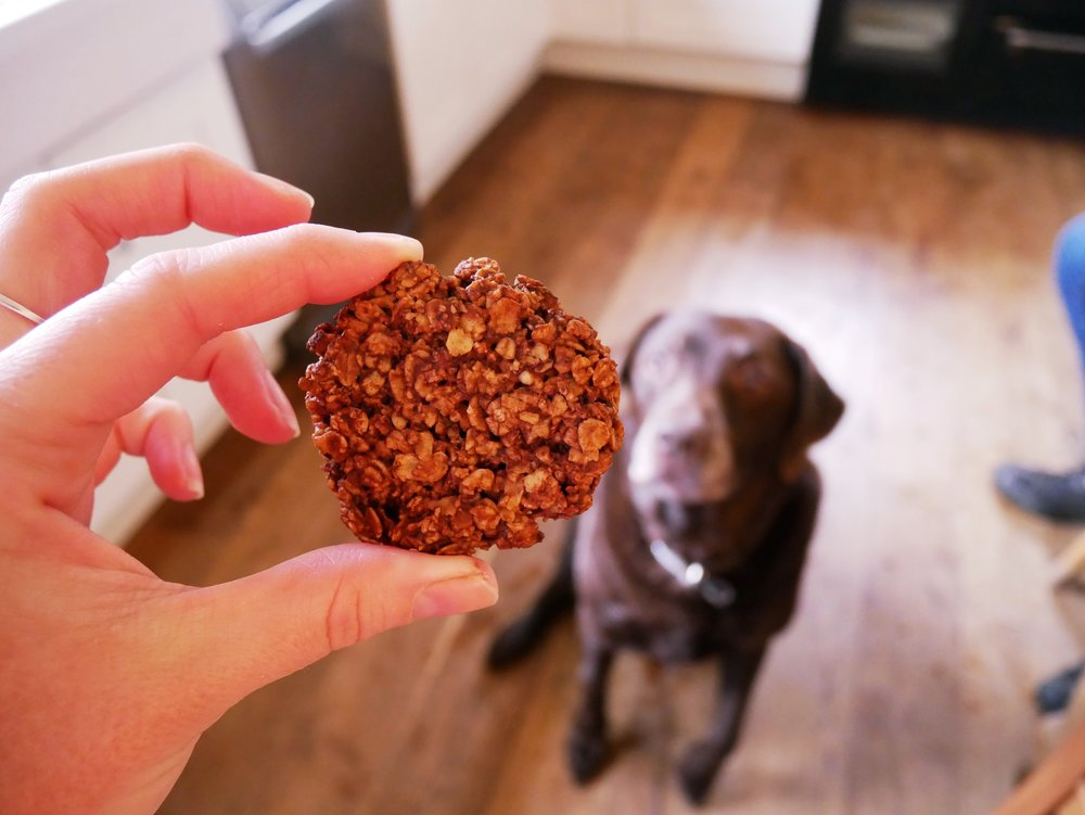 gluten free oat cookie with Labrador