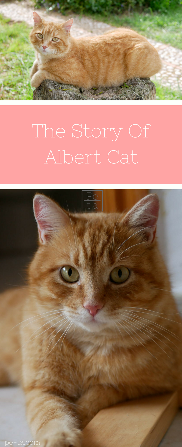 The Story Of Albert Cat