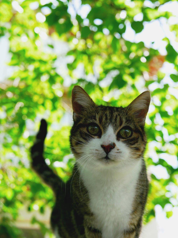 curious little tabby cat