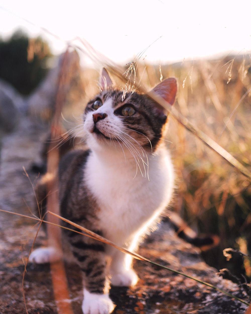 Katie Cat.jpg