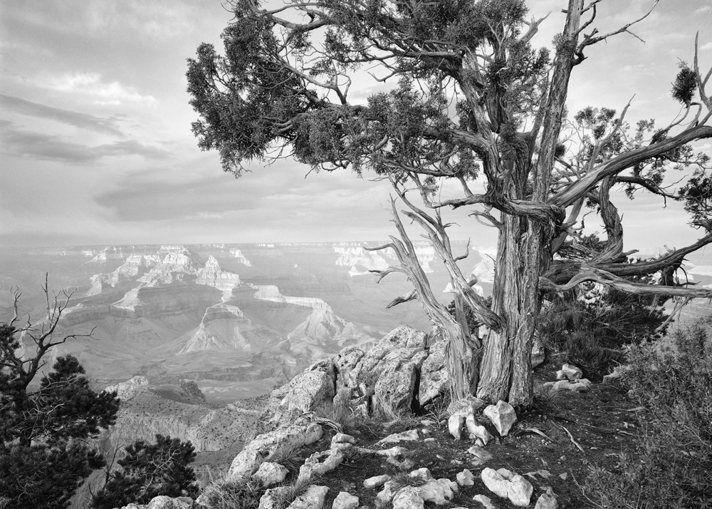 Juniper and The Grand Canyon, AZ, 1975