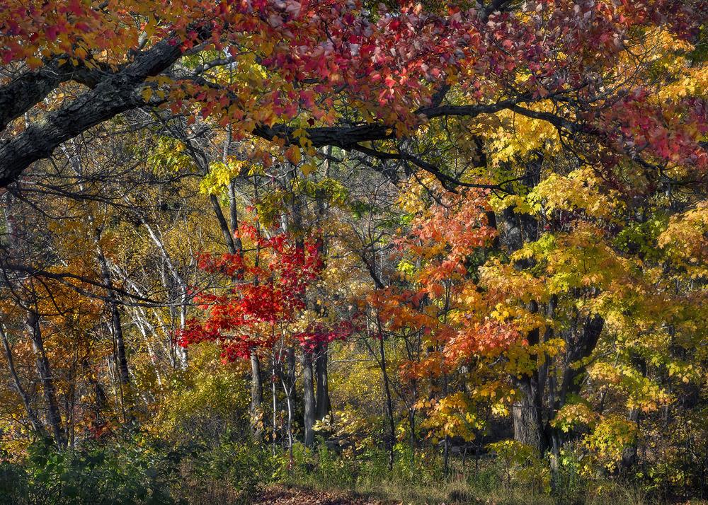 Autumn, Ontario, Canada, 2013