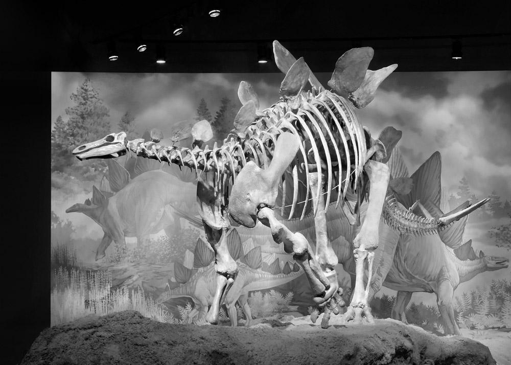 Dinosaur #1, Vernal, UT, 2004