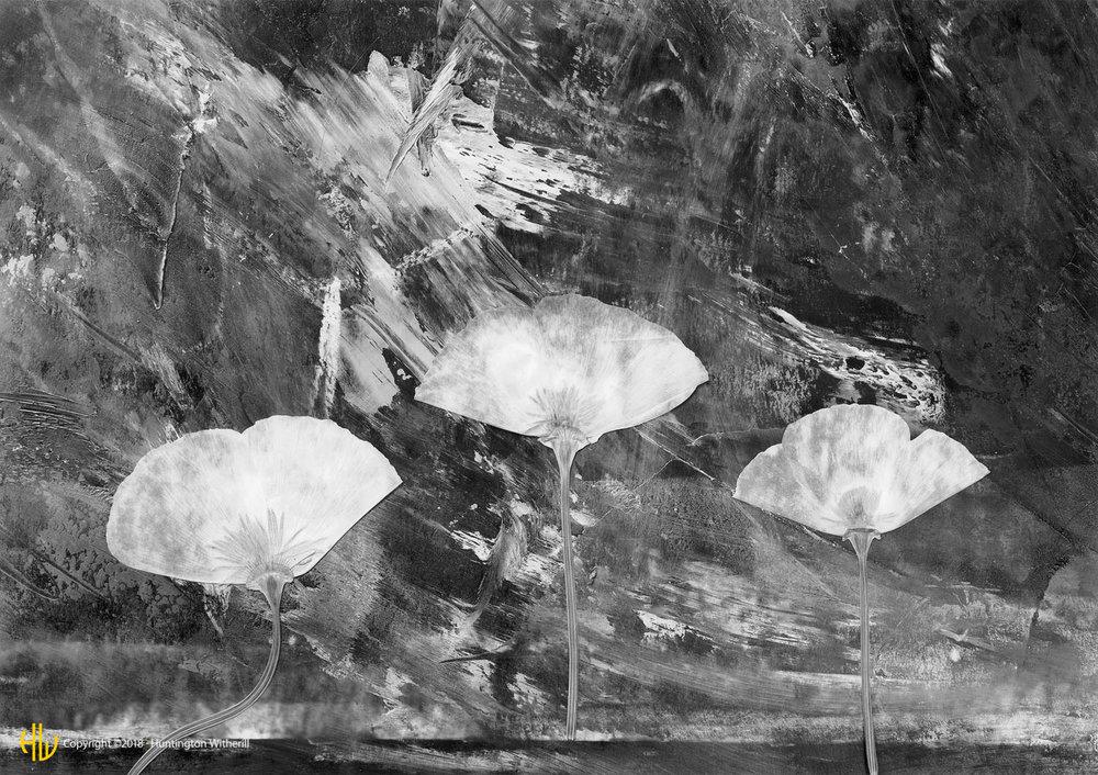 Poppies, 1991