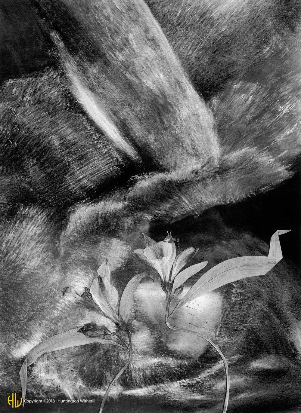 Peruvian Lilies, 1991