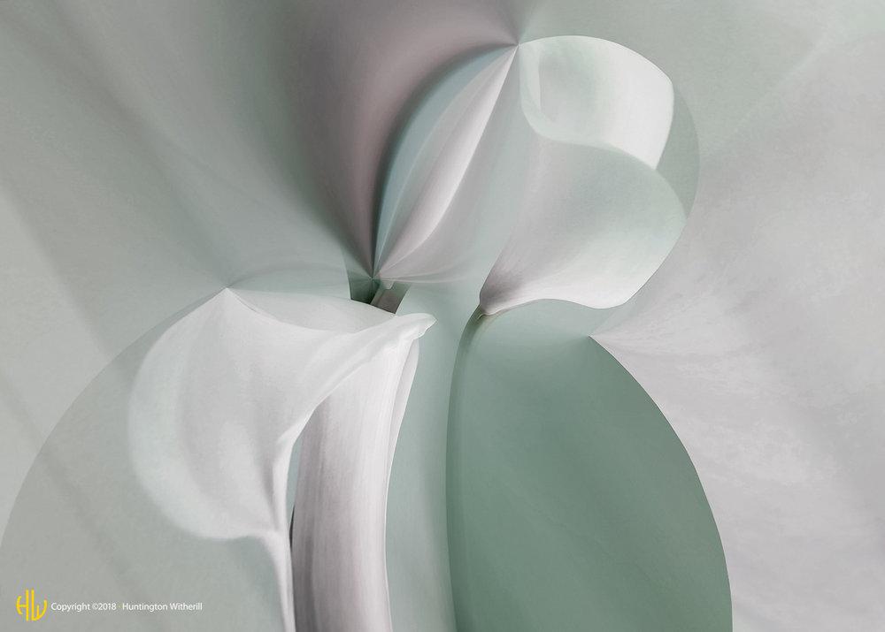 Calla Lilies #24, 2003