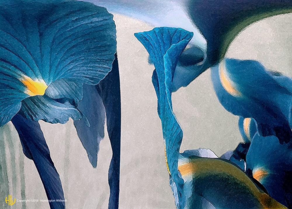 Iris #1, 2002