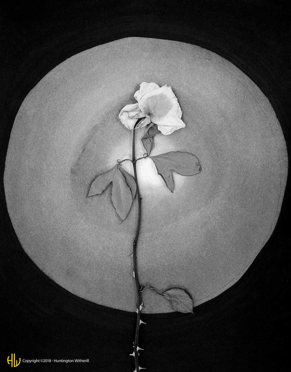 Rose, 1989