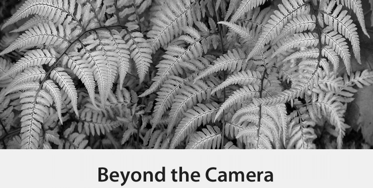 Copy of Beyond the Camera