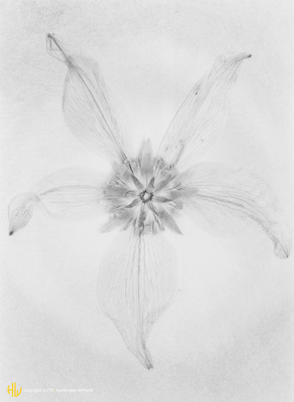 Untitled Flower, 1989