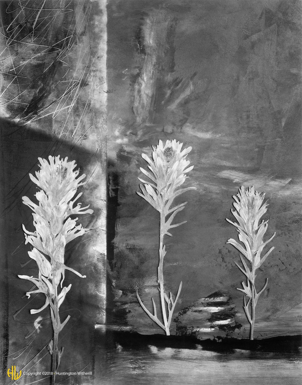 Indian Paintbrush, 1991