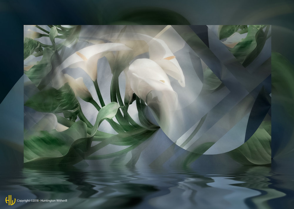 Calla Lilies #29, 2004