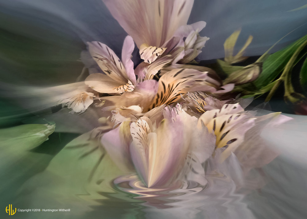 Peruvian Lilies #12, 2005