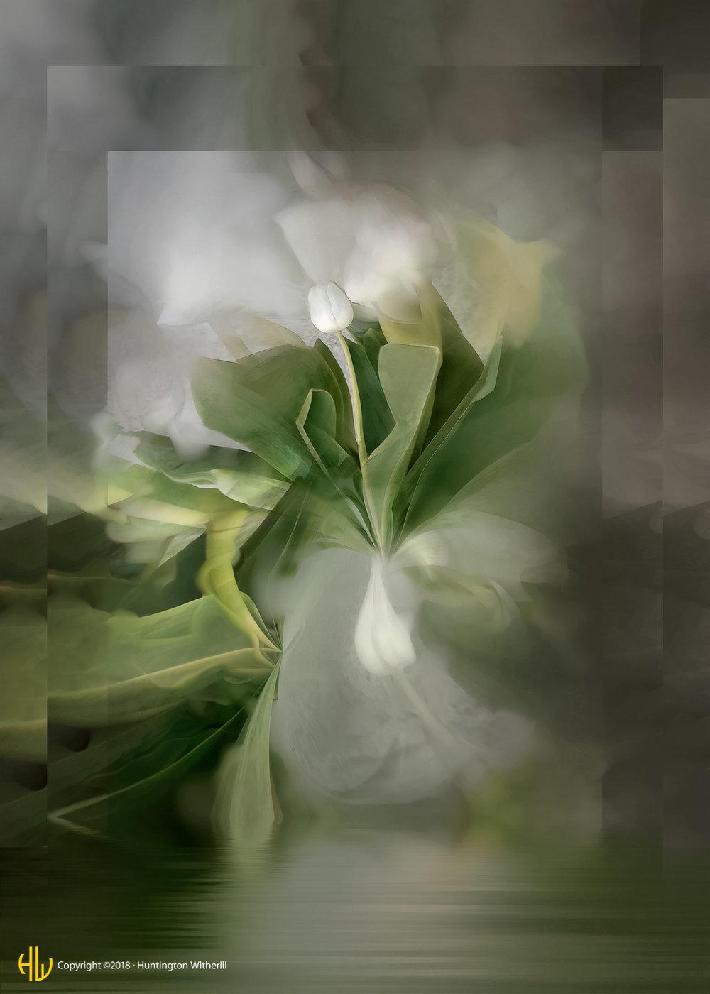 Tulips #53, 2005
