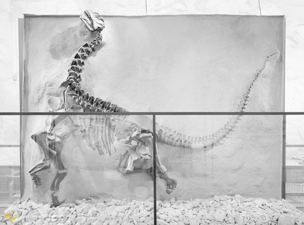 Display, Dinosaur National Monument, CO, 1998