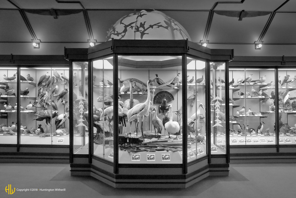 Bird Display, LACMNH, 2008