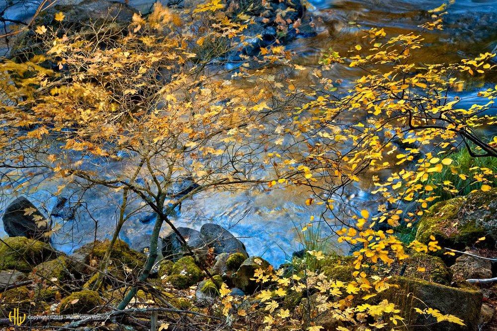 Foliage, Burney Falls, CA, 2007