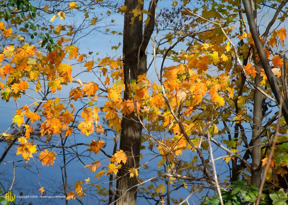 Autumn Color, NH, 2013