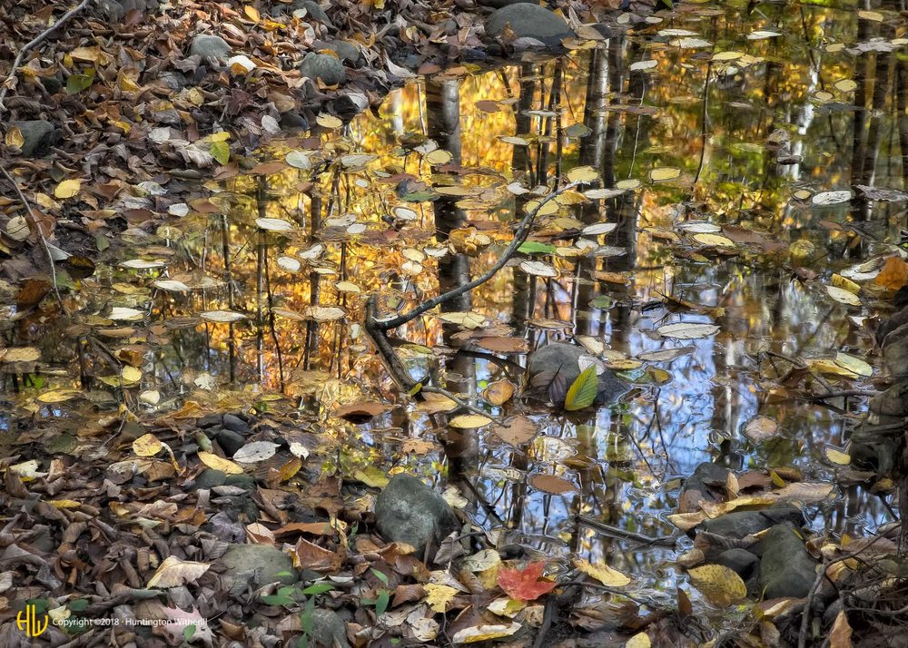 Floating Leaves, Ricketts Glen, PA, 2013 (c)
