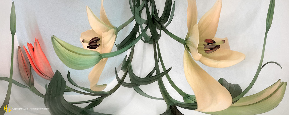 Lilies #11, 2002