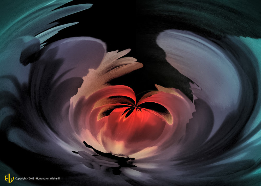 Parrot Tulip #16, 2002