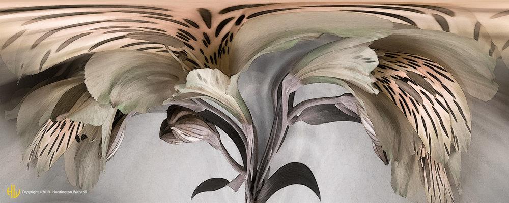 Peruvian Lilies #1, 2002