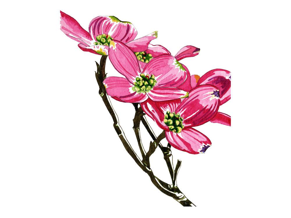 Multiple Blooms - Dogwood Series