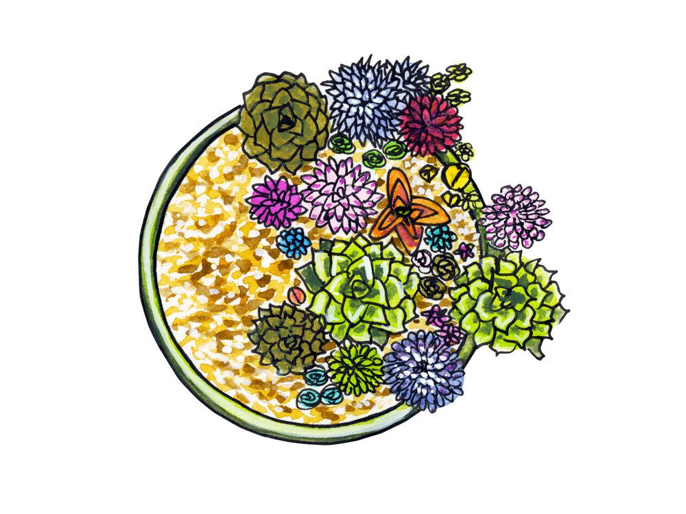 succulents_website.jpg