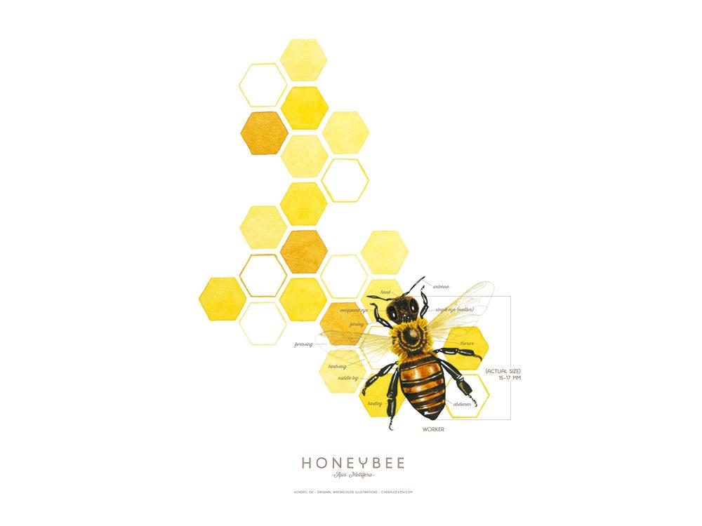Honeybee Print Design