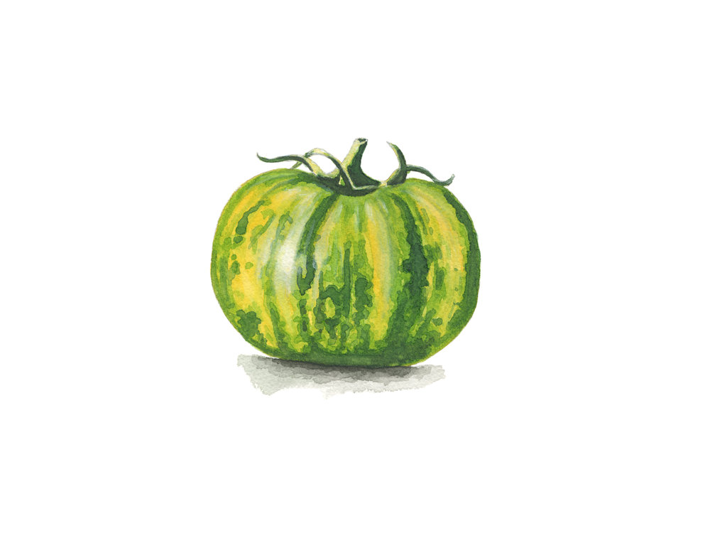 Green Heirloom Tomato
