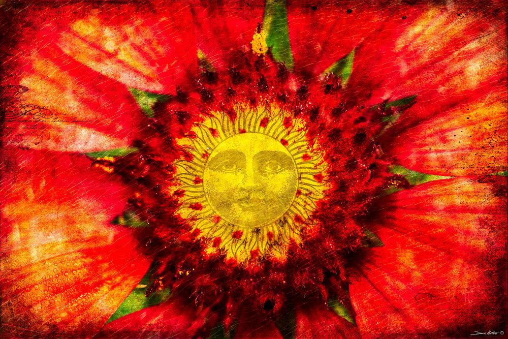 """Sunny Blanketflower"""