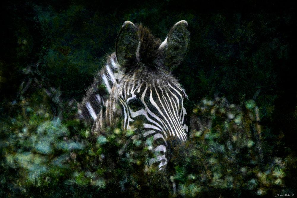 """""""Peeking Zebra"""""""