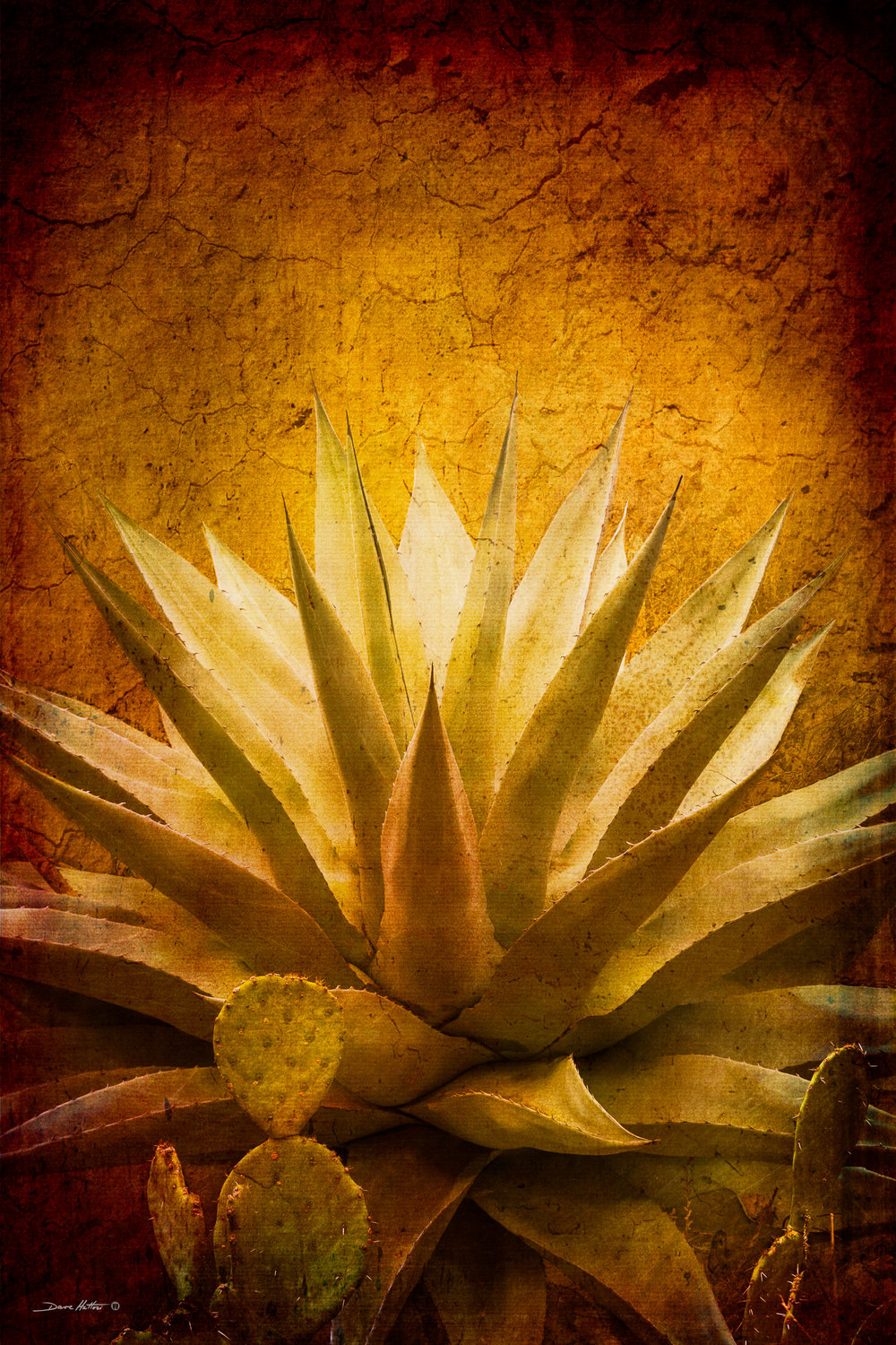 """Agave and Prickly Pear"""
