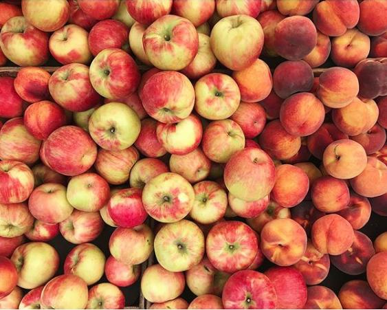 apples peaches a matter of taste rebecca tucker.png