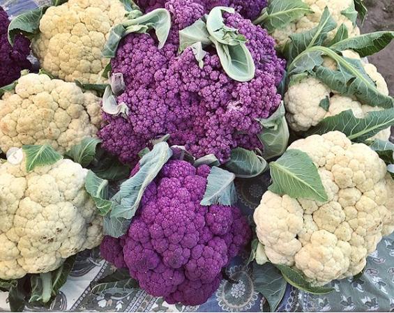 cauliflower a matter of taste rebecca tucker.png