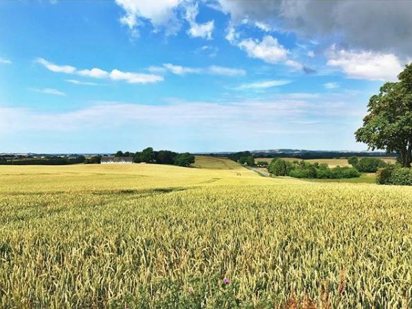 farmland denmark.png