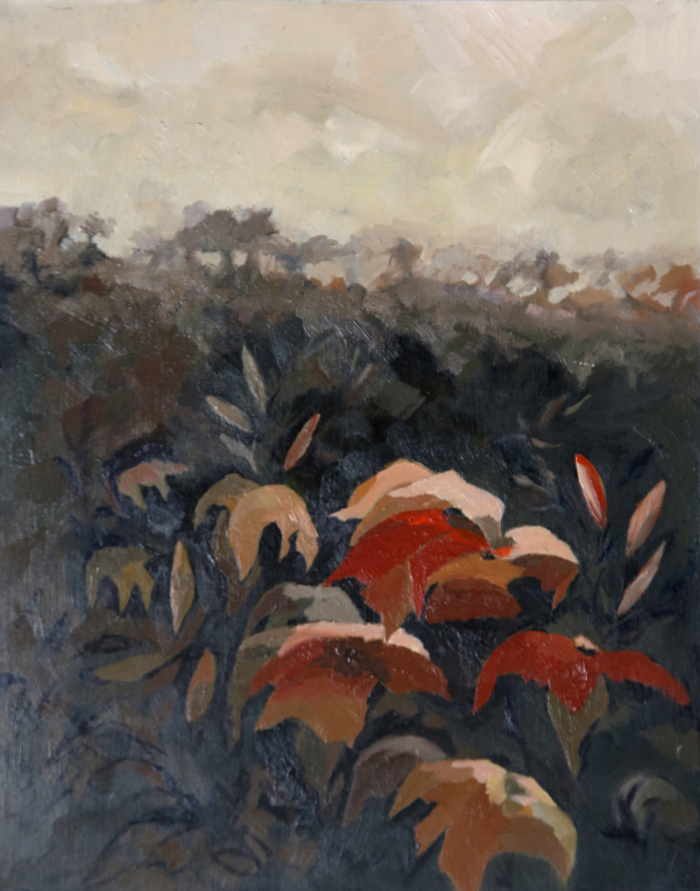 Lilies in the Field