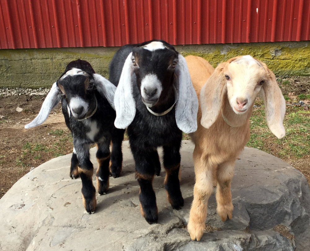 3 babies.jpg