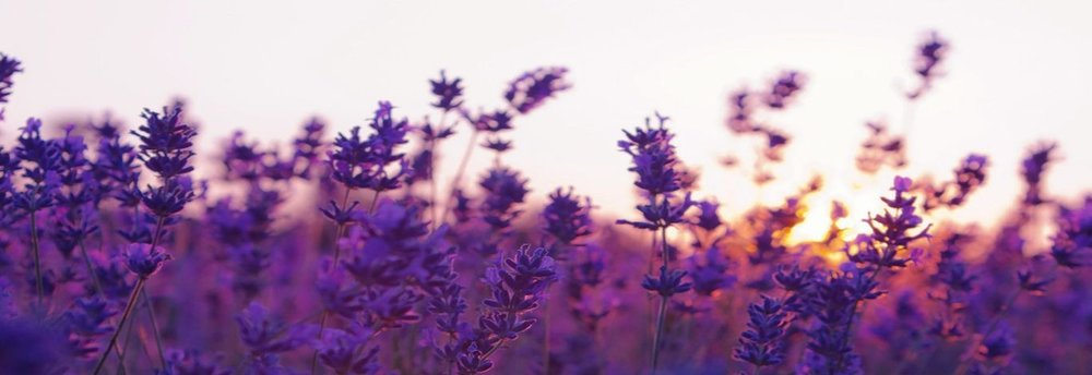 Sunset-On-Lavender-Wallpaper-Widescreen.jpg