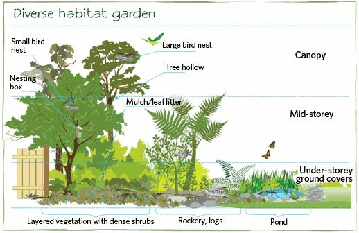 Ecologically balanced habitat gardens require food, shelter and water as well as a diversity of structure and native plants. Source: City of Ryde, Australia, http://www.ryde.nsw.gov.au)